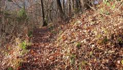 4k hiking on forrest path with autumn leaves. steadycam uhd stock video Stock Footage