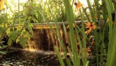 Dolly shot of fountain with black eyed susan flowers and setting sun Stock Footage