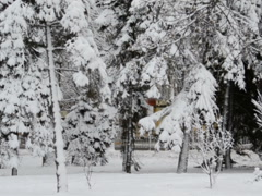 Stock Video Footage of Winter park. Related clips are in my portfolio in 1920x1080.
