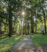 Sun beams in deciduous forest Stock Photos