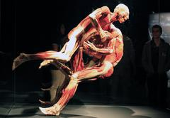 """""""Body Worlds"""" a traveling exhibition - stock photo"""