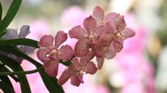 Beautiful purple orchid Stock Footage