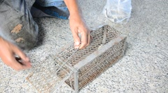 Old man use Mackerel fish for A rat cage trap containing bread as bait Stock Footage
