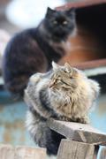 Homeless cat portrait in the autumn city Stock Photos