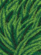 Spruce branches Stock Illustration