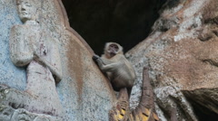 Monkey on carved rock buddhist temple Stock Footage