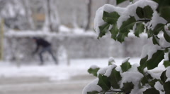 Slow Motion Shot Of Evergreen Bush Twig Covered With Snow Stock Footage