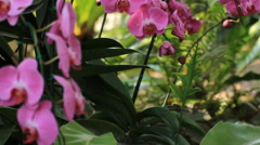 Beautiful pink orchid - stock footage
