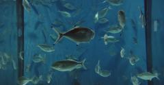 Many Fish swimming in Aquarium Cinema 4K - stock footage
