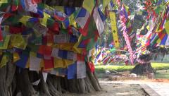 Beautiful Buddhist praying flags on old tree in Lumbini, Nepal Stock Footage