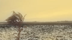 Sky, goldenrod Stock Footage