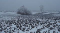 Frost tussock Stock Footage