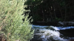 Tree overlooking a stream No.6 - stock footage