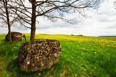 boulder on alp meadow - stock photo