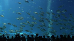 Big aquaria Stock Footage