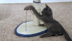 Cute kitten playing with mouse toy Stock Footage