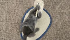 Cute kitten have fun playing with toys on scratching post Stock Footage