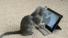 Cute kitten playing with digital tablet computer taking selfie Stock Footage