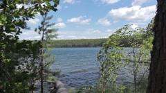 trees, wild lake - stock footage
