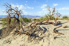 Stock Photo of desert landscape in the death valley without people