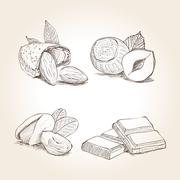 Nuts and Chocolate Illustrations - stock illustration
