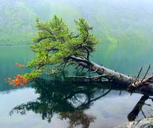 Multinsky lake in the altai mountains. nice view and coniferous trees on the  Stock Photos