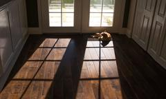 Lazy Cat Sunbathing Window in House Sunlight Outside Shining into Dark Interior - stock photo