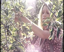 Apple Orchards and Fruit Growing, Australia (Archive Footage) Stock Footage