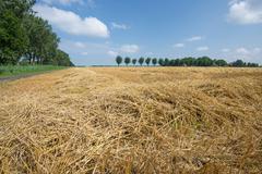 Dutch farmland with harvested wheat Stock Photos