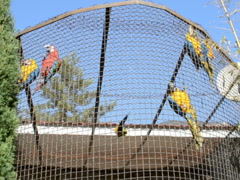 Parrots in the open-air cage. Related clips are in my portfolio in 1920x1080. Stock Footage