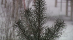 Green branch ate in a snowstorm the day - stock footage