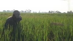 Farmer in Rice Feild Stock Footage