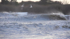 Waves smashing in to shore in slow motion while seagulls hanging low over the wa Stock Footage