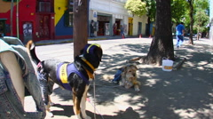 Buenos Aires - Boca Dogs 14 Stock Footage