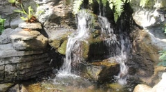 Waterfall ferns and Butterflies No.1 Stock Footage