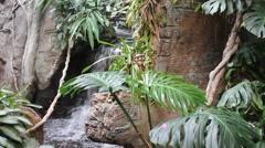 Waterfall & Leafy plants - stock footage