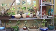 Small bonsai tree in a ceramic pot Stock Footage