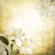 Vintage apple tree flowers on paper background - stock photo