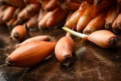 Onion seed - stock photo
