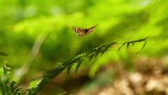 20140718 Butterfly Fern Leaf 2 [4K, UHD] Stock Footage