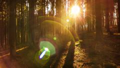 20140131 Fir Forest Sun [4K, HDR, Pan/Tilt, Dolly] Stock Footage