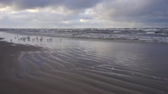 Seagulls sitting on the beach in a storm in December - stock footage