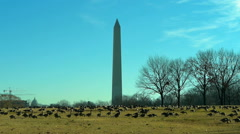 Washington DC in winter Stock Footage