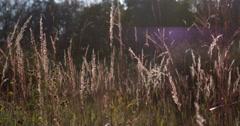 Field in sunshine 4k Stock Footage