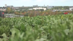 Vegetables in the field with road and buildings Stock Footage