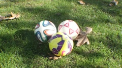 Soccer Ball in the Park Stock Footage