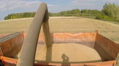 Wheat is unloaded from a combine in the back of a truck Stock Footage
