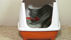 Cat using closed litter box Stock Footage