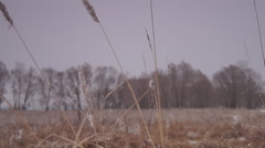 Grass, frost, Stock Footage