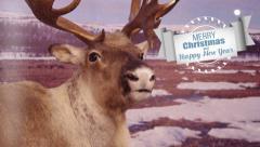 Seasons greetings with deer. Stock Footage